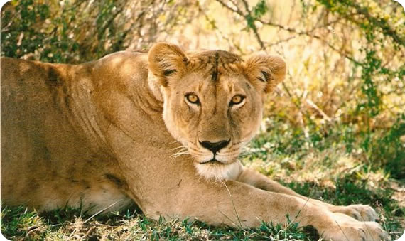 Image result for 7 Days Mara Nakuru Samburu.Safari